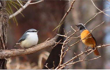 開田高原の早朝!野鳥観察会